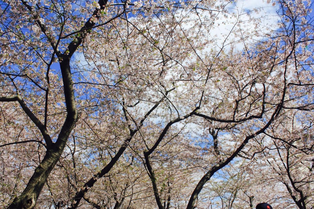 Photo Apr 02-8