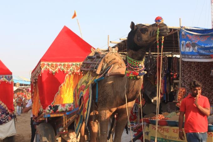 Inside Pushkar Camel Fair – The Biggest Camel Festival inIndia