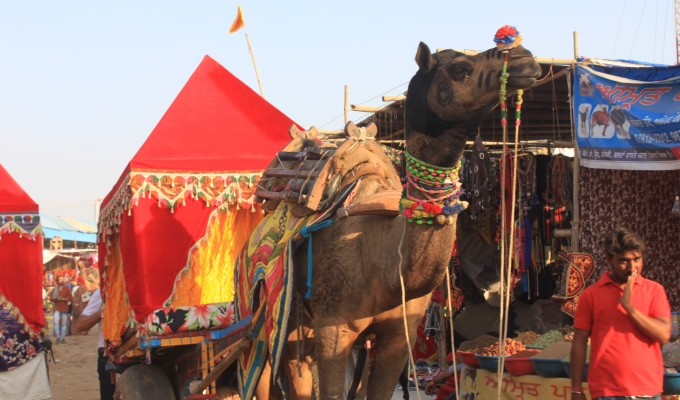 Inside Pushkar Camel Fair – The Biggest Camel Festival in India